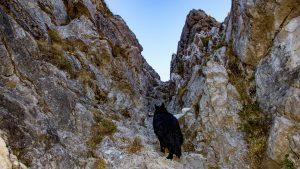 Wandern mit Hund - Alpschellner Gschröff